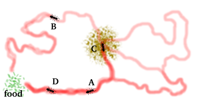 Antdiagram4